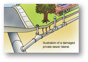 Illustration of a damaged private sewer lateral.
